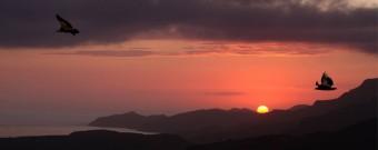 Bosa. Volo del Grifone al tramonto